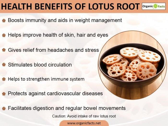 9 Amazing Benefits of Lotus Root - safimex.com