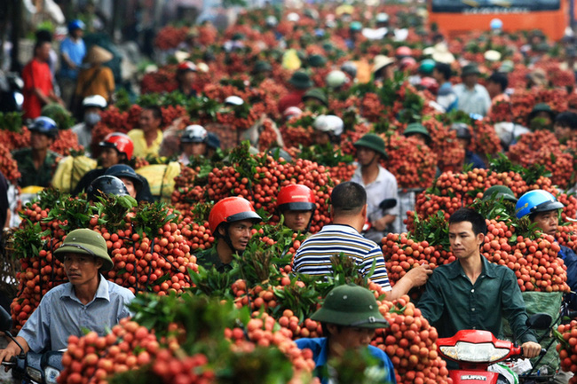 Festival promotes litchi from Thanh Hà - safimex