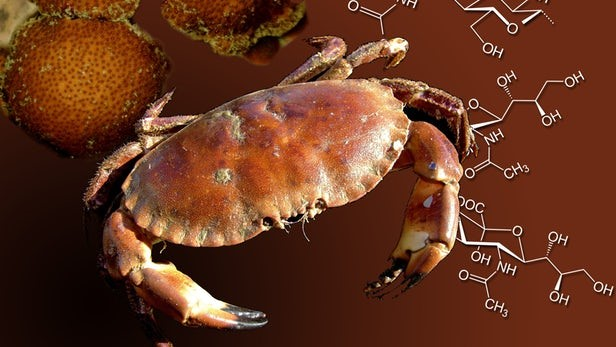 Crab Shells Used To Produce Cheaper Pharmaceuticals | SAFIMEX