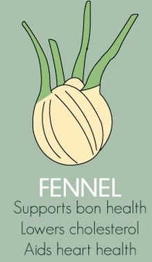Fennel Herbs Export SAFIMEX spices