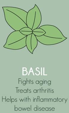 Basil Herbs Export SAFIMEX spices