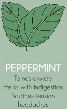 Peppermint Herbs Export SAFIMEX spices