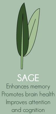 Sage Herbs Export SAFIMEX spices