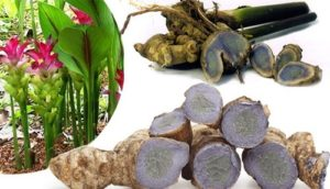 Black Turmeric Medicinal Benefits