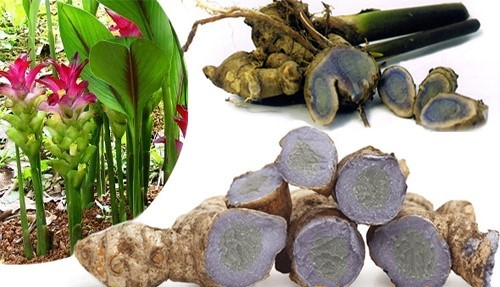 Black Turmeric Medicinal Benefits - SAFIMEX JOINT STOCK COMPANY