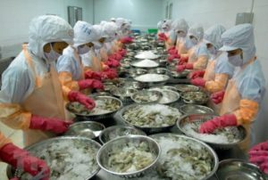 Vietnam's Shrimp Exports Face Technical Barriers In Korea