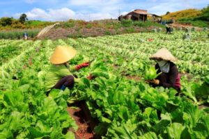 Vietnam Boasts Huge Potential For Green Growth