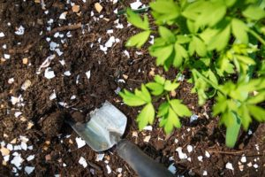 How To Fertilize Soil With Eggshells