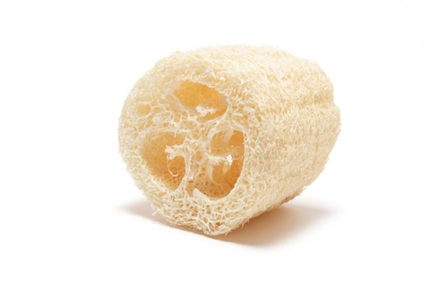 Dried Loofah