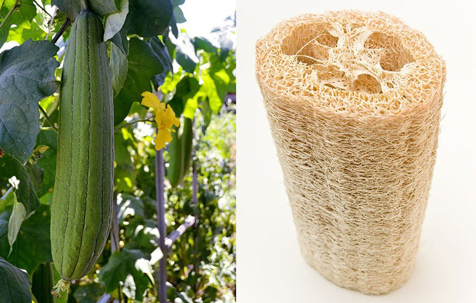 Dried Loofah eco friendly nature beauty skin care luffa