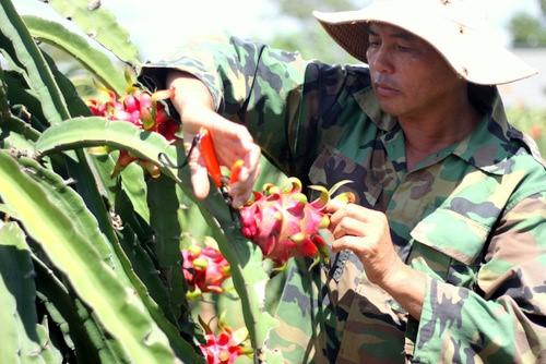 Vietnam fruit vegetables