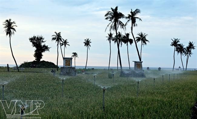 Ly Son Island, Vietnam - Kingdom of onions and garlic