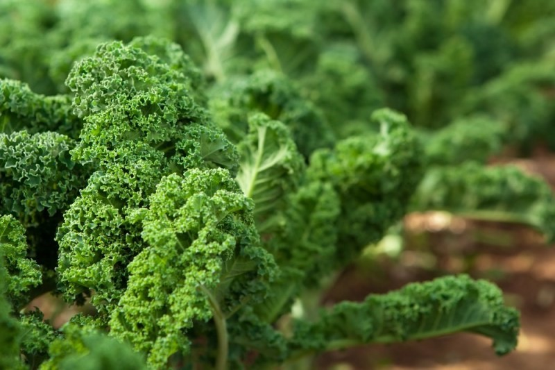 11 Healthiest Leafy Greens You Should Be Eating kale vegetables