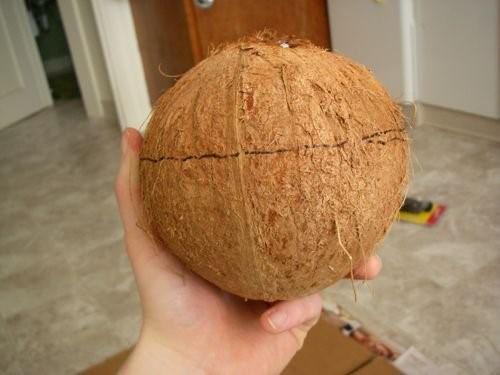 Coconut Shell SAFIMEX
