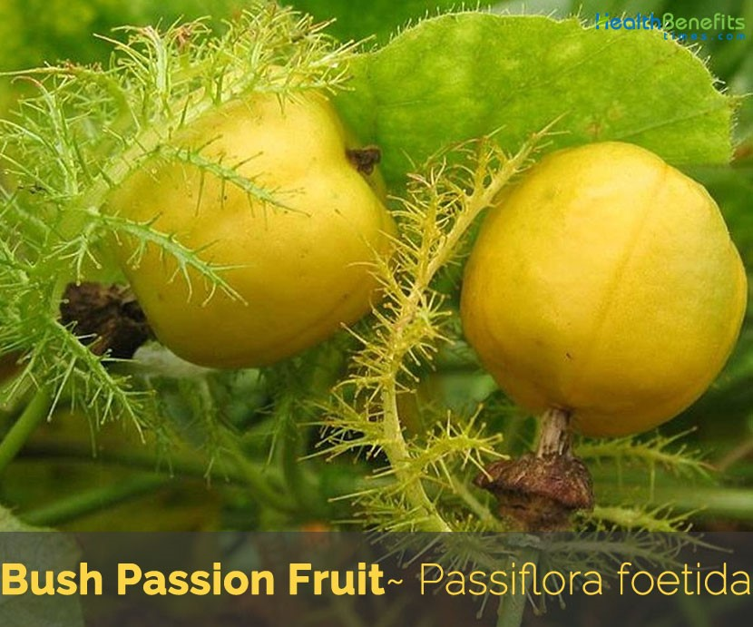 Health benefits of Bush Passion Fruit SAFIMEX