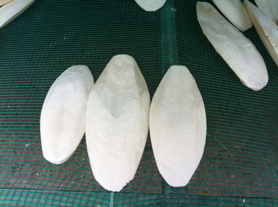 Cuttle Fish Bone  safimex EXPORT VIETNAM
