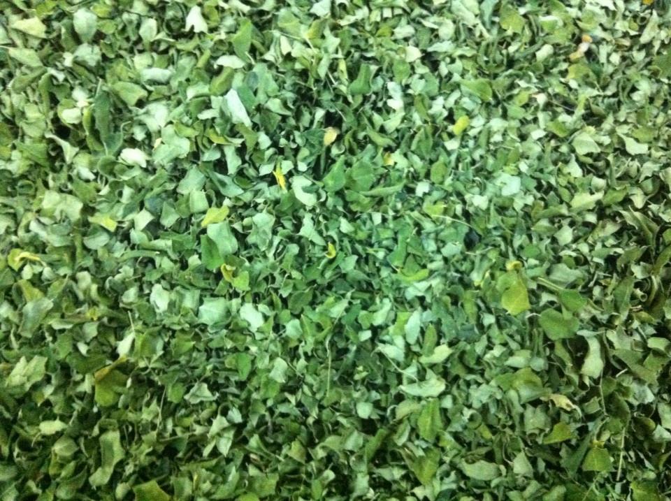 Moringa leaves health benefits