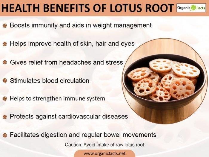9 Amazing Benefits of Lotus Root - safimex.com