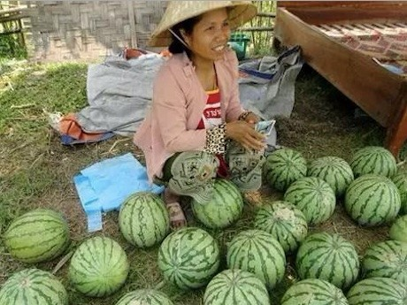 Watermelons Hit The Market