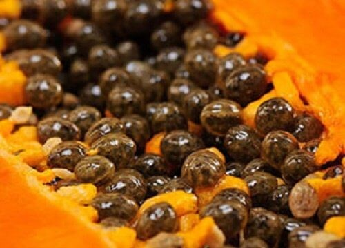 Discover 5 Huge Benefits Of Papaya Seeds - SAFIMEX JSC