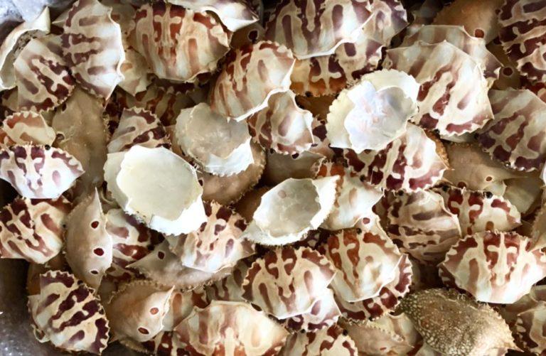 Crab shell safimex aqua sea vietnam