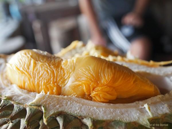 first taste of durian vietnamese fruit SAFIMEX