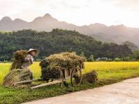 Rice – A Major money-earner of Vietnamese people