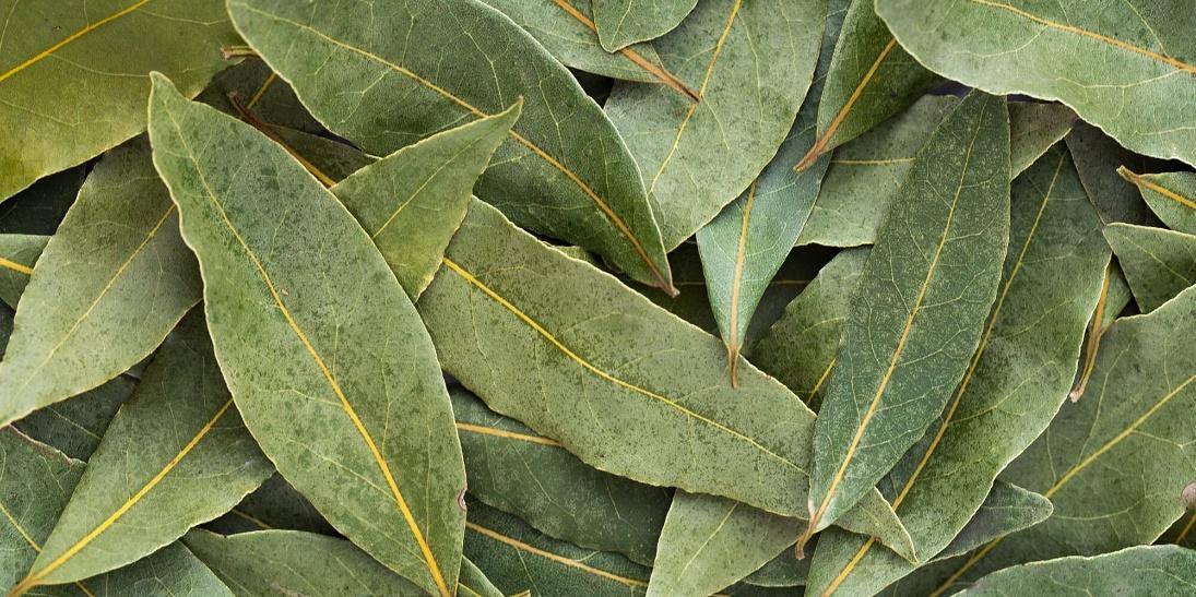 herb bay